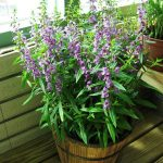 4 Best Plants for Container Gardening