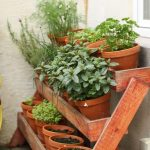 The 4 Best Herbs for Container Gardening