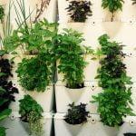 Best Herb growing Ideas