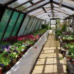 Planting Nursery garden