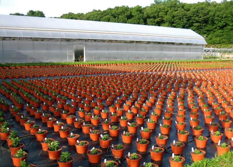 Planting Nursery Garden Of