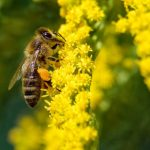 Why is pollination important